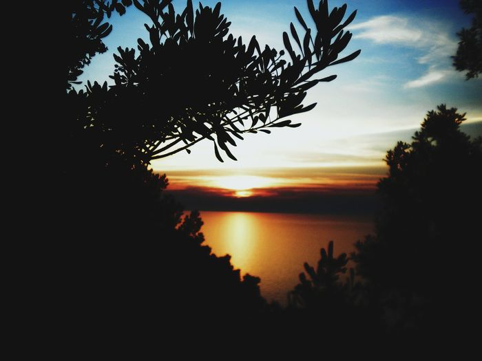Lost in the Sardinian sunset Silhouette Tree Sunset Reflection Sky Scenics Nature Beauty In Nature Tranquil Scene No People Tranquility Outdoors Landscape Cloud - Sky Horizon Over Water Night Water Lost In The Landscape Paint The Town Yellow
