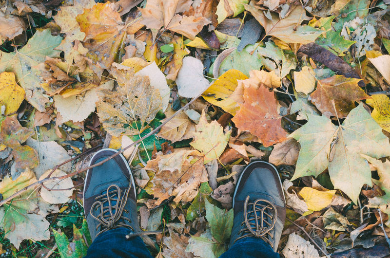 Low Section Of Man Standing By Fallen Maple Leaves On Field