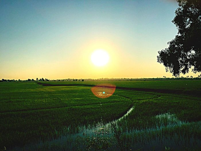 Field Landscape Nature Sunset Rural Scene Grass Agriculture Clear Sky Tranquil Scene Sky Sun Tranquility Scenics Beauty In Nature Sunlight Growth No People Tree Green Color Outdoors Morning time EyeEm Nature Lover Pictures Tell A Story Eyeem Klong Luang