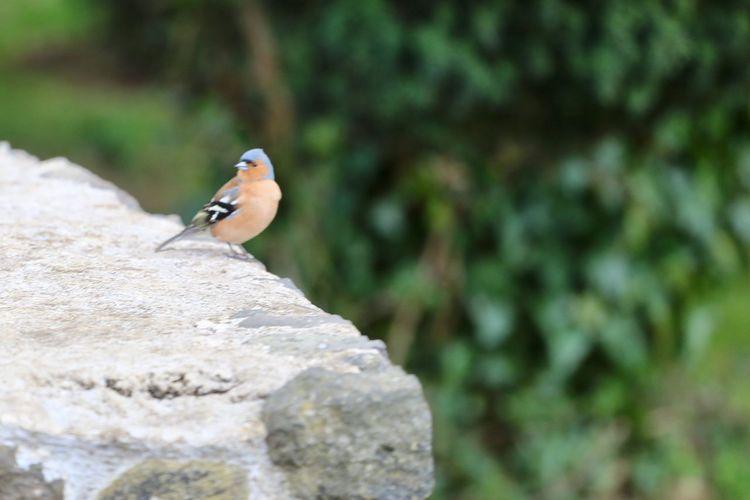 Beautiful colours Animal Wildlife Animals In The Wild Animal Themes Animal Vertebrate One Animal Bird Nature Outdoors Perching