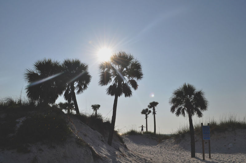 Beauty In Nature Clearwater Clearwater Florida Clearwaterbeach Idyllic Landscape Lens Flare Light Trails Outdoors Palm Palm Tree Palm Trees Palms Palms Trees Sand Dune Silhouette Sun Sun Beams Sun Light Sunbeam Sunlight Sunny Tranquil Scene Tranquility Woman