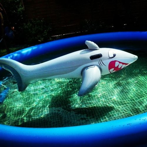 Nowy Ziomek W Moim basenie rekin shark