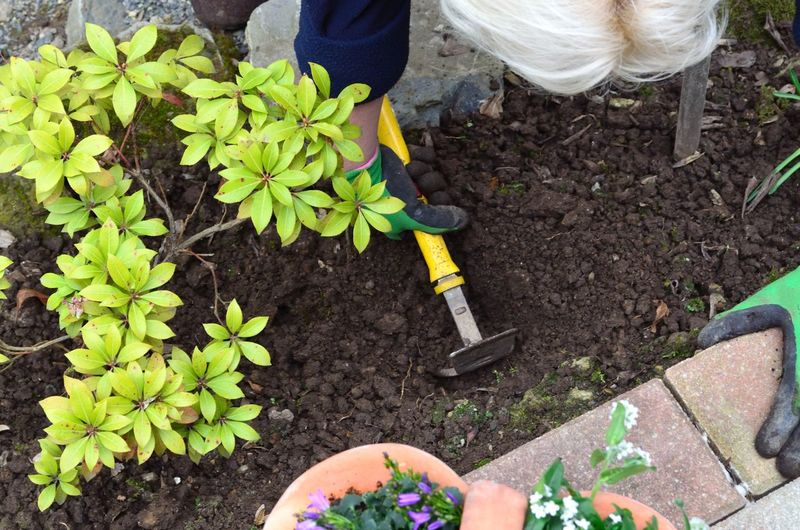 High angle view of senior adult gardening in yard
