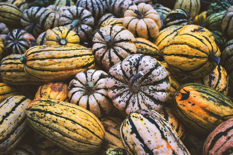 Business Food And Drink For Sale Healthy Eating Large Group Of Objects Market Organic Pumpkin Sale