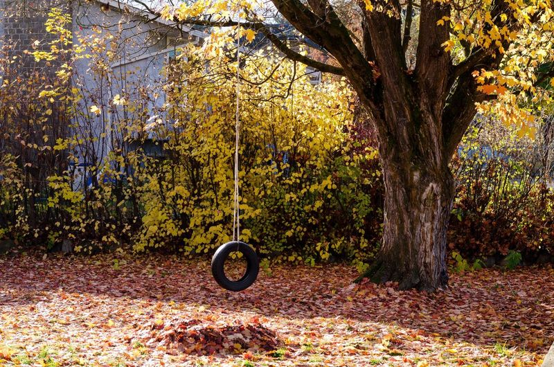 Bicycle on tree trunk during autumn