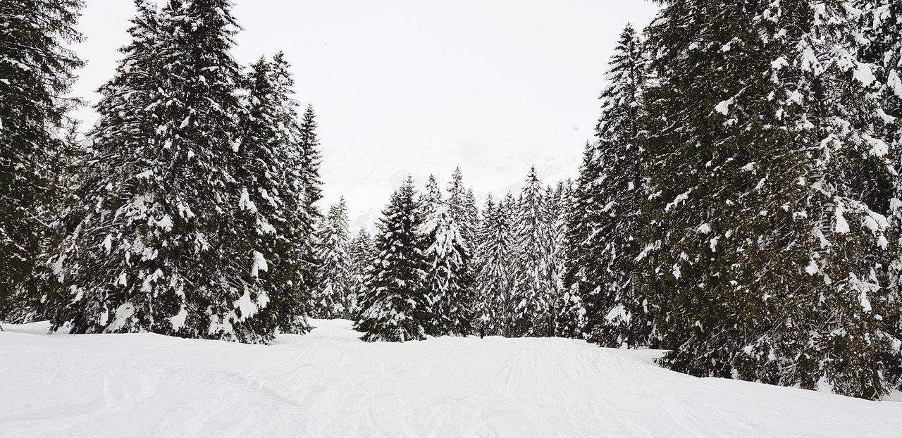 Forest Sky Cloud - Sky Tree Snow Cold Temperature Winter Sky Pine Tree Snowfall Pine Woodland Pine Wood Banff National Park  Pine Cone Deep Snow Ski Jacket Snowing Spruce Tree Blizzard