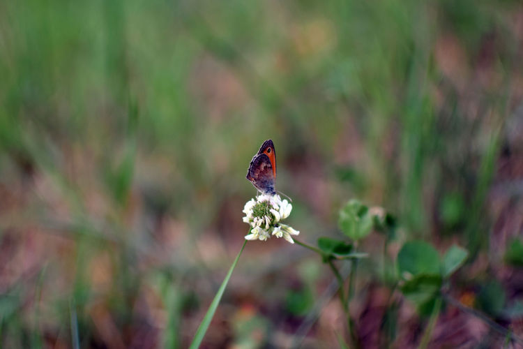 Close-up of ladybug on flower against blurred background