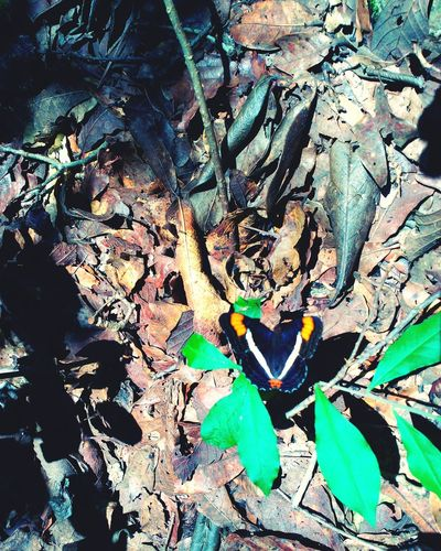 Mariflowers Amazing Nature <3 Nature Photography Beauty In Nature Leaves🌿 Nature_perfection Chiapas, México Movilephotography Leaves 🍁 Mariposa En La Naturaleza Butterfly ❤ Papallones