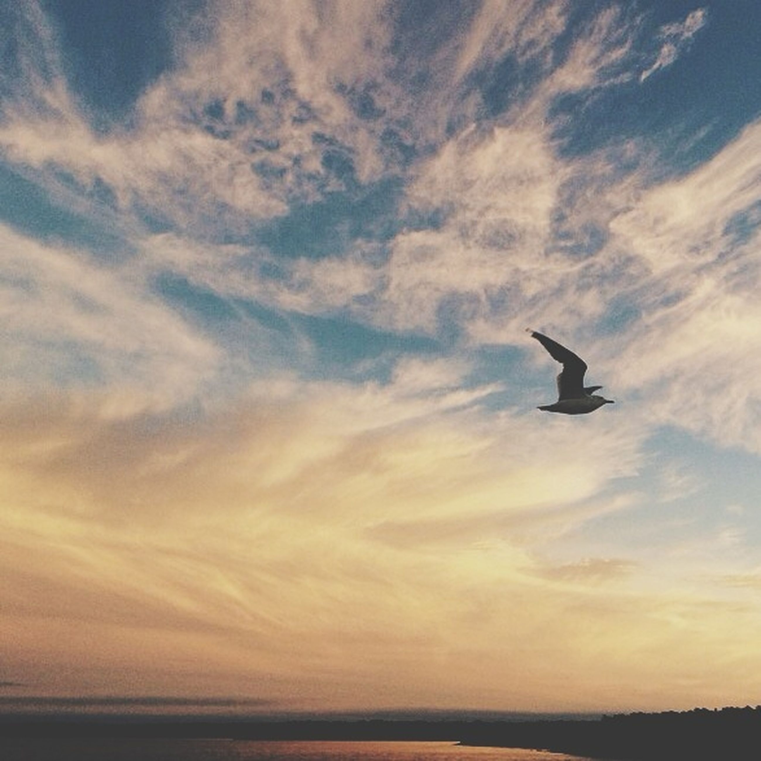bird, animal themes, animals in the wild, wildlife, flying, one animal, sky, silhouette, spread wings, mid-air, nature, cloud - sky, beauty in nature, tranquility, full length, sunset, low angle view, scenics, outdoors, seagull