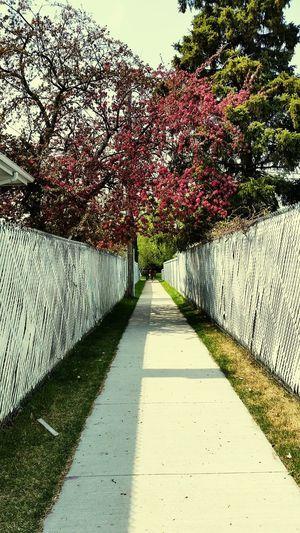 Walk Your Way Way Road Walk