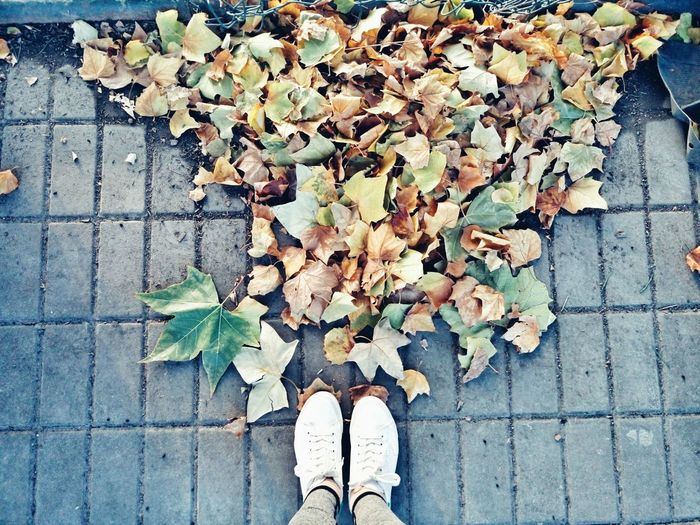 Low Section Of Woman Standing By Maple Leaves On Footpath