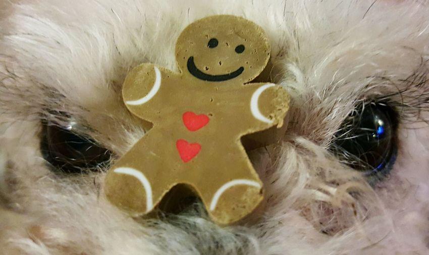 Gingerbread Fur Furbaby Eyes Brown Eyes Close-up Detail Perspective Alertness One No People Brown Pet Festive Season Seasons Greetings Faces In Places