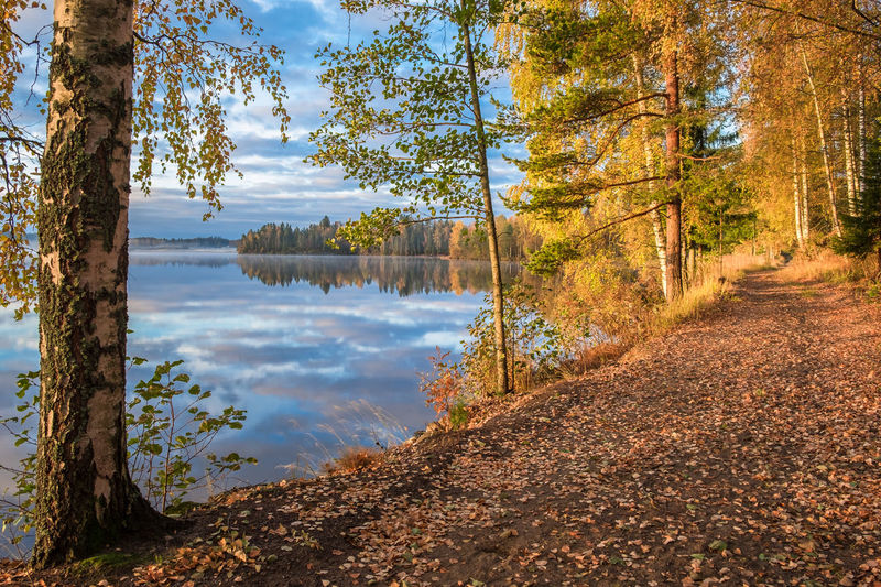 Scenic view of autumn landscape, fall colors trees, blue water, tree reflected in lake, seasons change, sunny morning, autumnal park, fall nature. Tree Beauty In Nature Scenics - Nature Tranquil Scene Tranquility WoodLand Outdoors Forest Autumn Tree Trunk Nature No People Water Lake Path Pathway Finland Fall Colors Colorful Yellow Color Orange Color Reflection Autumn Fog Sunrise