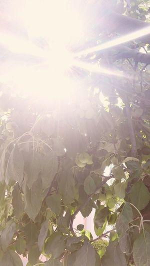 ..raggi di sole..