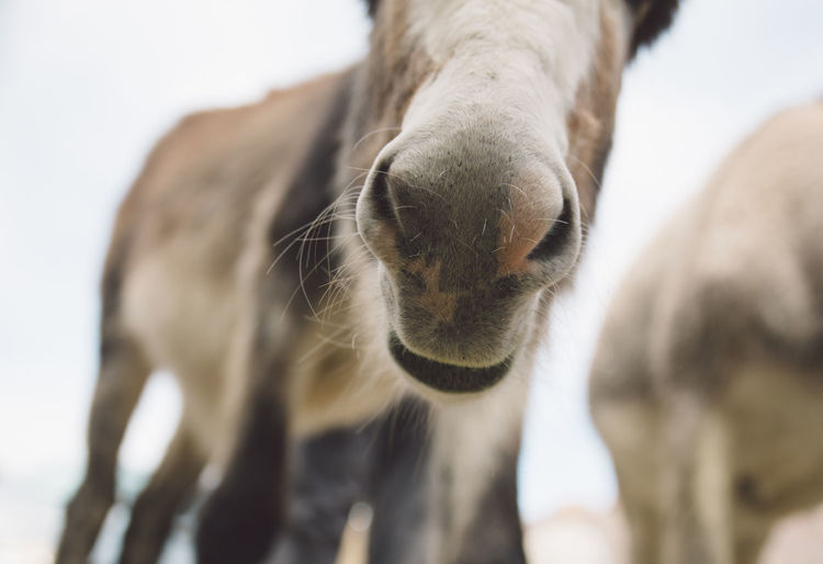 Low Angle View Of Donkey Against Sky