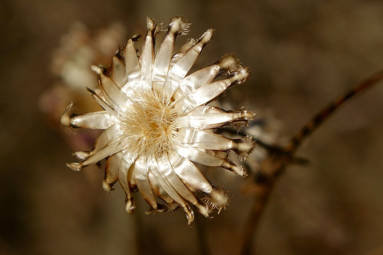 Close-Up Of Flower Growing On Field