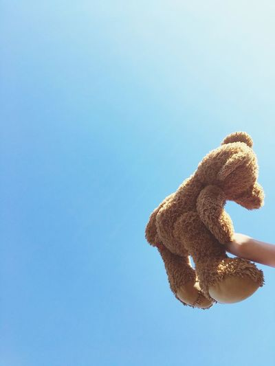 Close-up of teddy bear against clear sky during sunny day