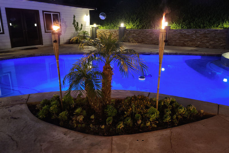 Potted plants by swimming pool at night