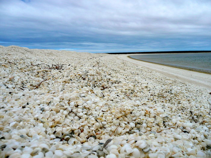 Ancient Beach With Shells Beach Beauty In Nature Cloud - Sky Horizon Over Water Live For The Story Millions Of Tiny Shells Nature No People Outdoors Scenics Sea Sea Shells Shell Beach Sky Tranquil Scene Tranquility Water