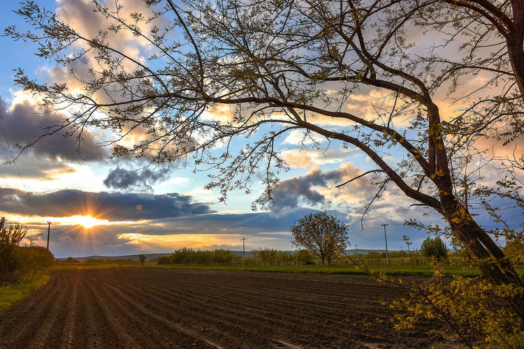 Sky Tree Plant Cloud - Sky Landscape Beauty In Nature Environment Tranquil Scene Scenics - Nature Field Tranquility Nature Land No People Sunlight Sun Rural Scene Sunset Agriculture Growth Outdoors Lens Flare