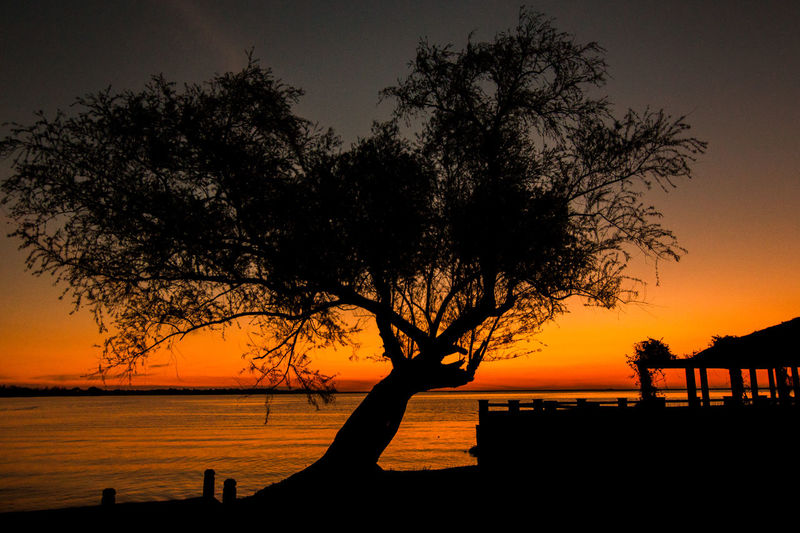Silhouette of trees at lakeshore