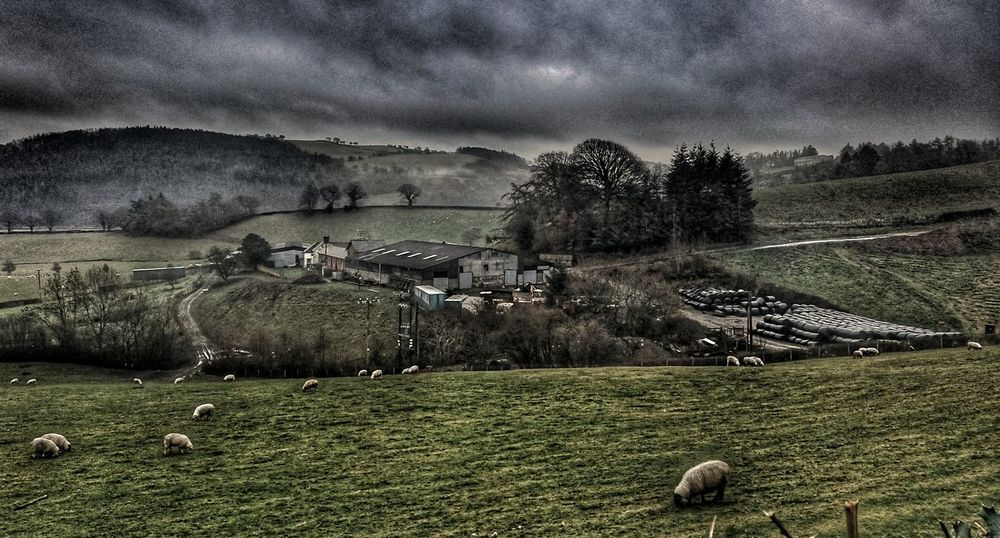 Distance Don't Mean Shit. Hidden Gems  Welsh Countryside Wales❤ Agriculture Beauty In Nature Farm Farm Life Sheep🐑 Farm Photos Farmhouse Nature Grass Sky Cloud - Sky Animal Themes