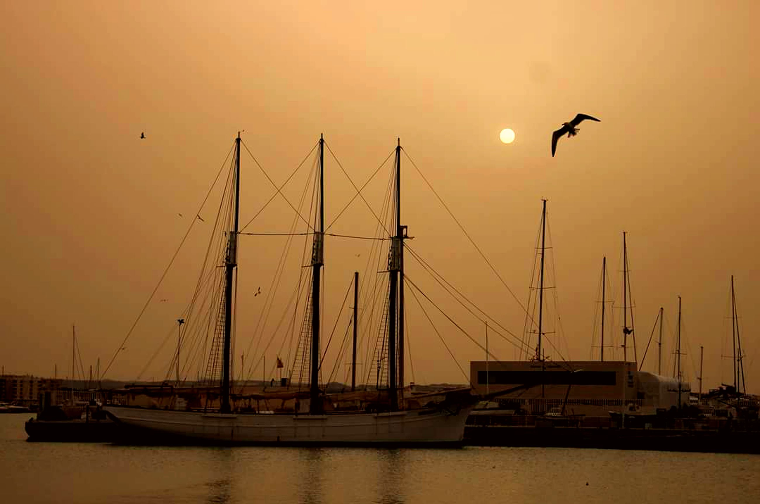 sunset, moody sky, sea, bird, flying, romantic sky, silhouette, no people, city, nautical vessel, landscape, sky, outdoors, nature, harbor, water