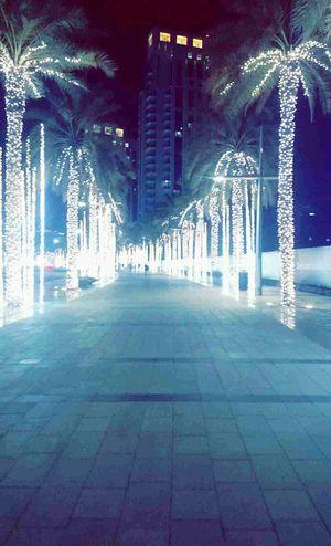 Learn & Shoot: After Dark Downtown Dubai Palm Trees Lights