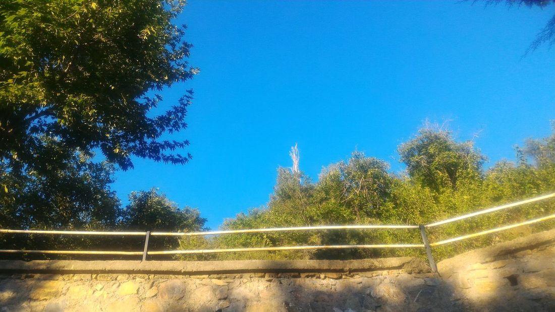 Malatya Yeşilyurt Agaclar Trees Mavigökyüzü Blue Sky