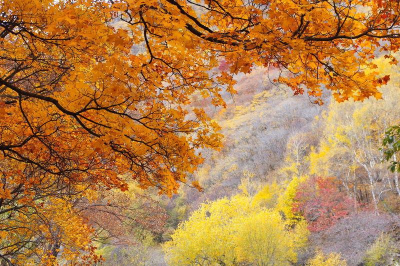 秋天 秋色 秋 Backgrounds Full Frame Autumn Textured  Abstract Yellow Nature Beauty In Nature No People Outdoors Multi Colored Close-up Low Angle View Day Tree Sky