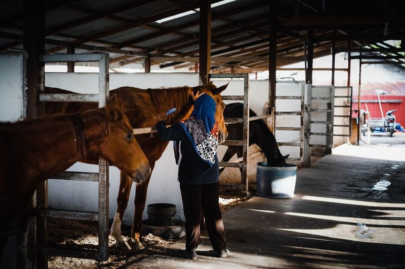 Care Horse Domestic Animals Livestock Working Occupation Day Adult People Indoors  Adults Only Mammal Animal Themes