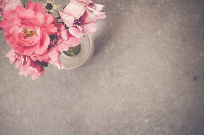 High angle view of potted pink roses on floor