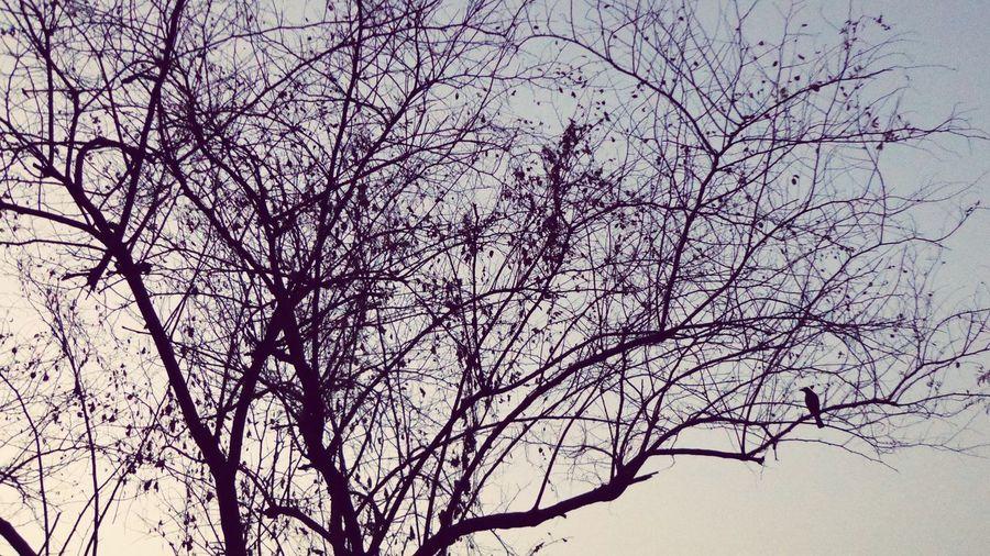 TwilightSight BirdwatchingBirdie Enjoying A Bliss Of Solitude