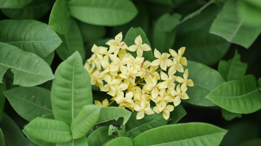 Flower Leaf Beauty In Nature Petal Fragility Nature Growth Yellow Close-up Outdoors Day No People Flower Head Blooming Freshness Green Color Plant