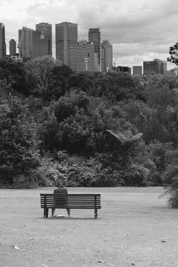 Built Structure Architecture Building Exterior Plant Tree Seat Bench Nature Day Building Empty Growth Outdoors Park Sky City Park - Man Made Space Land Absence Park Bench Skyscraper Melbourne