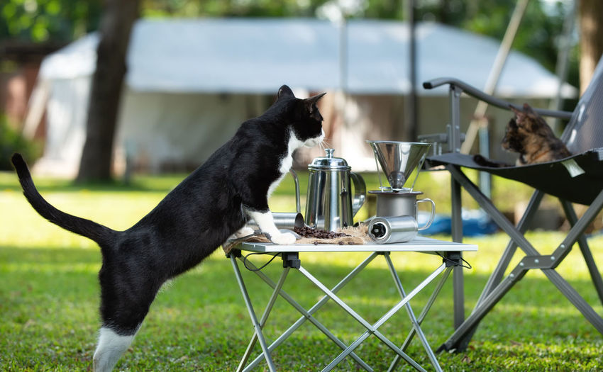 Cat leaning on table in backyard