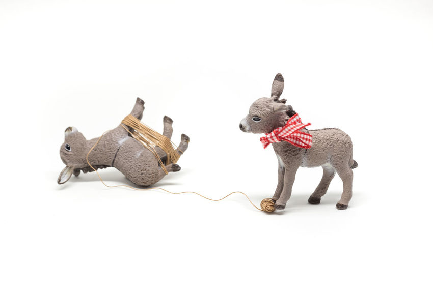 Tied up donkey Animal Animals Bestfriend Cute Donkey Donkeys Farm Farm Animals Friends Friendship Kids Kids Playing Playing With The Animals Rope Roped Ropes Small Tied Up, Toy Toyphotography Toys White Background