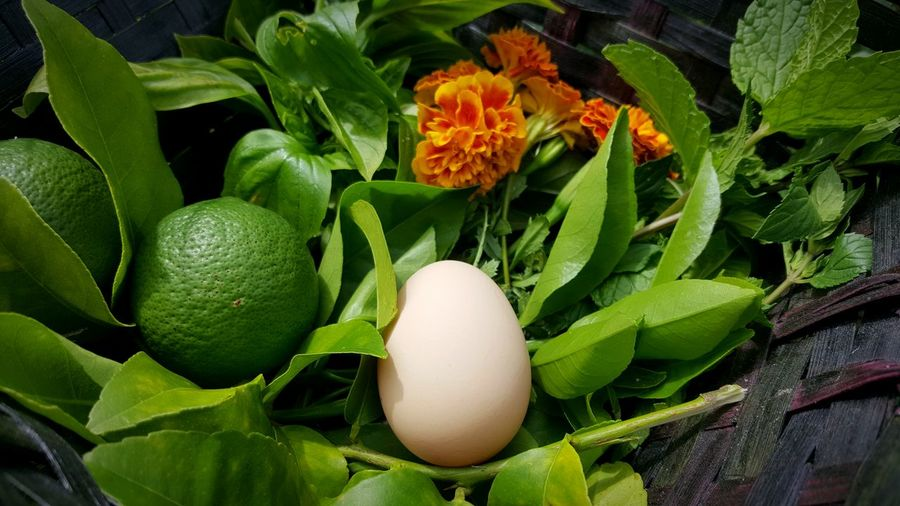 Close-up of egg with lemons and mint leaves in wicker basket