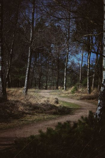 I always wandered. Is it we, that makes the choice, or is it the choice that makes us. Sky And Clouds Trees And Sky EyeEm Best Shots EyeEmNewHere EyeEm Nature Lover Canonphotography Canon_photos Canon EOS 70D Pure Photography No People Pathway Paths Of Life Lightseeker Soulsearcher