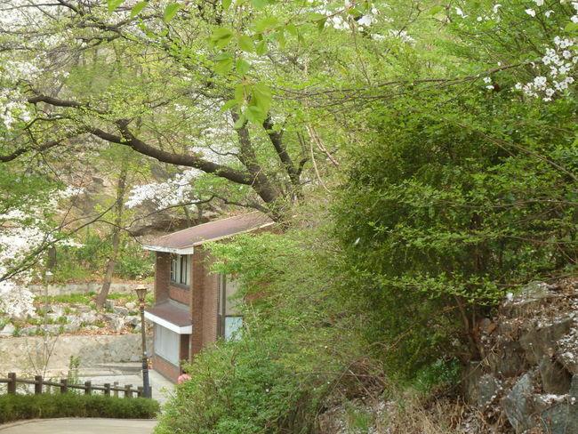 Blooming Blossom Garden Nature Royalgardens Spring Tree Urbannature