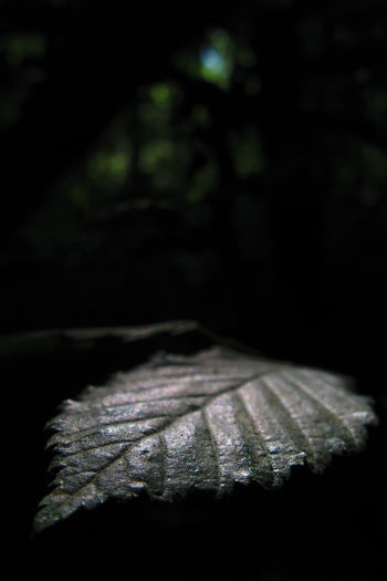 Beauty In Nature Close-up Creepy English Countryside Forest High Contrast Leaf Nature No People Spooky Sunlit Leaf Unretouched Woodlands