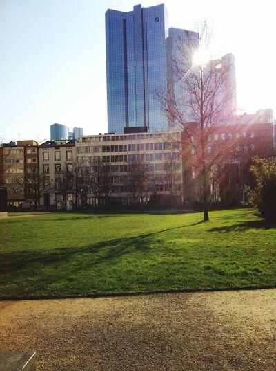 Hello Summer! Sonne Skyline Rothschild Park Stadtpark Stadtleben Hanging Out Relaxing Frankfurt