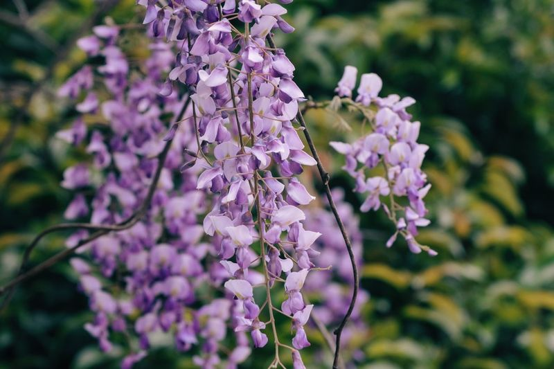 Flowering Plant Flower Plant Freshness Fragility Purple Vulnerability  Beauty In Nature Petal Focus On Foreground Close-up Nature Flower Head Selective Focus Growth Day No People Inflorescence Botany Blossom