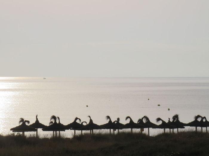 Photo 1 Seaview Strand Parasol Schirm Beachumbrella Sunshade Sombrilla Playa Flamingo Bird Colony Beauty Salt - Mineral Dawn