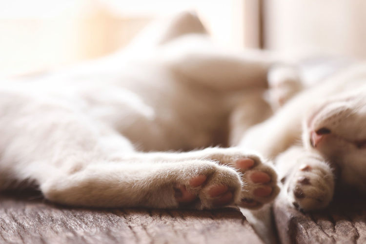 Selective focus on cat foot Mammal Animal Domestic Pets Animal Themes Domestic Animals Relaxation One Animal Vertebrate Indoors  Selective Focus Close-up Paw No People Lying Down Domestic Cat Cat Animal Body Part Resting Feline Animal Leg Whisker