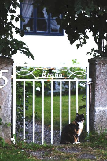 Cat Kitten Animal Themes Idyllic Scenery Idyllic Picturesque Animal Photography Animals Mammal On The Street Outdoors Tranquil Scene Pet Photography  Pet Outdoors Fence Ironwork  Vintage Signs Vintage Style