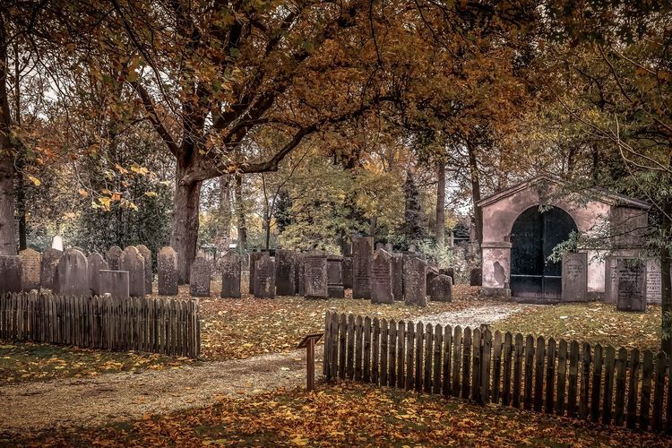 Trees in cemetery during autumn