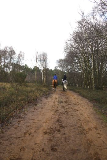 Horses Thursley Common Bare Tree Beauty In Nature Day Domestic Animals Friendship Full Length Nature Outdoors Outdoors Photograpghy  People Real People Rear View Riding Sky Surrealism The Way Forward Togetherness Tree Two People Walking Women