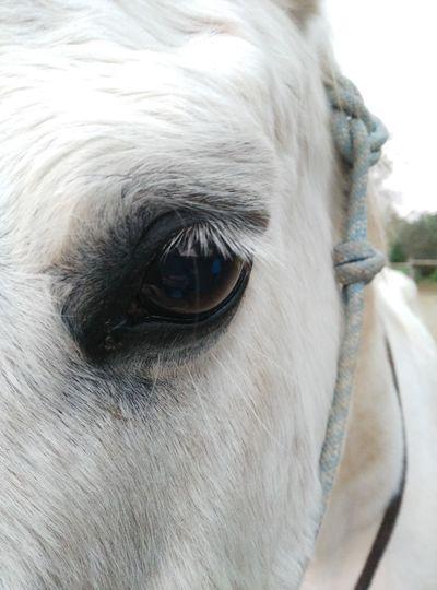 Le regard d'un cheval en dit long sur sa pensée Horse Enjoy The New Normal