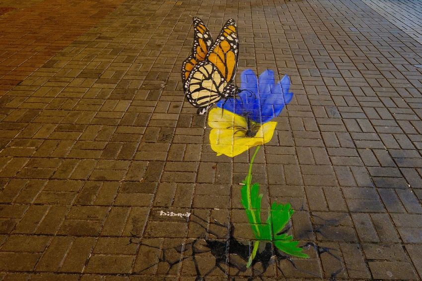 Art And Craft Flower Flowering Plant High Angle View Outdoors Paving Stone Plant Stone Street Streetart Streetphotography